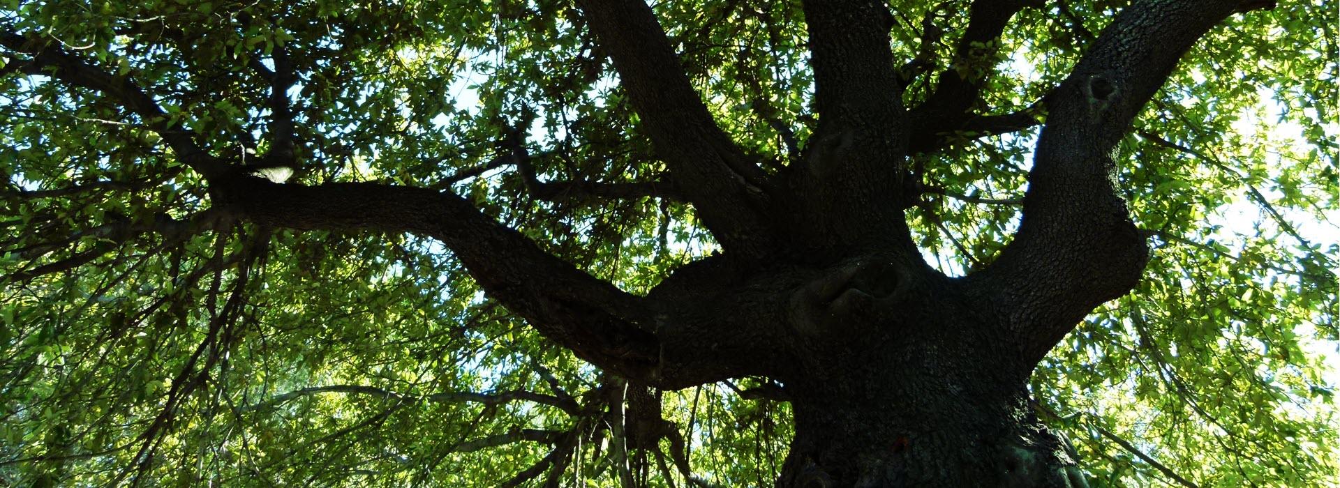 valutazione_alberi