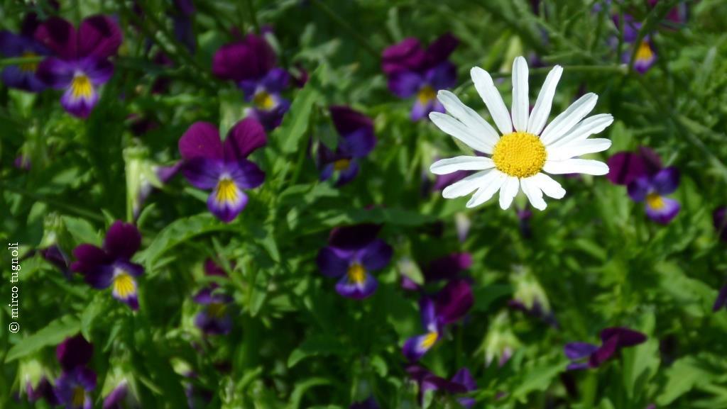 41_giardinoerbe_26mag18-156_mod