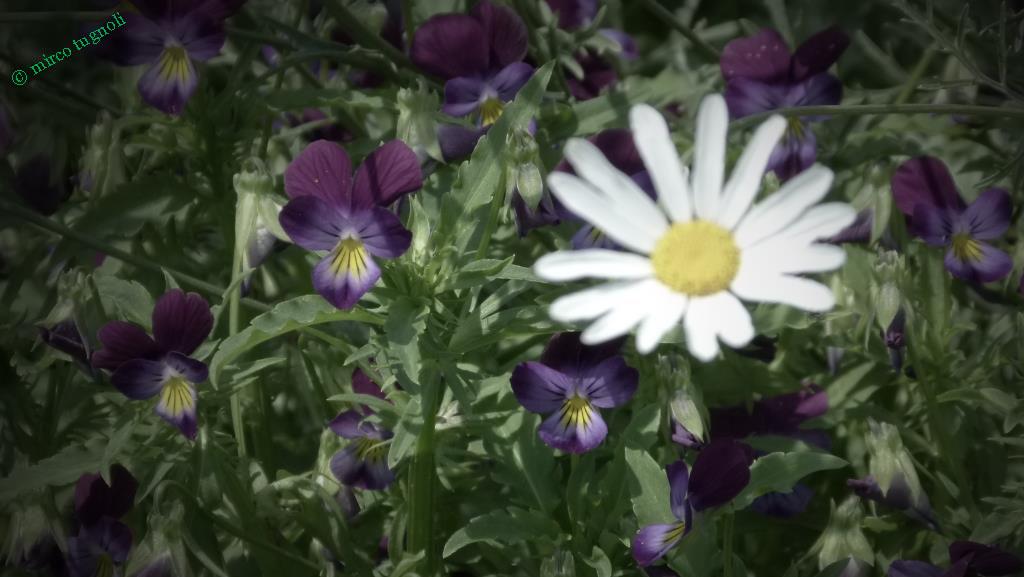42_giardinoerbe_26mag18-247-mod