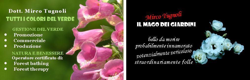 mircotugnoli_d_compr
