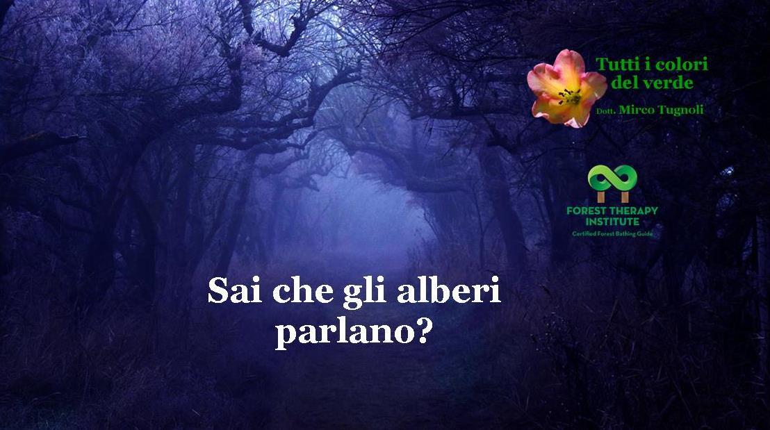 mircotugnoli_fti_11_bis