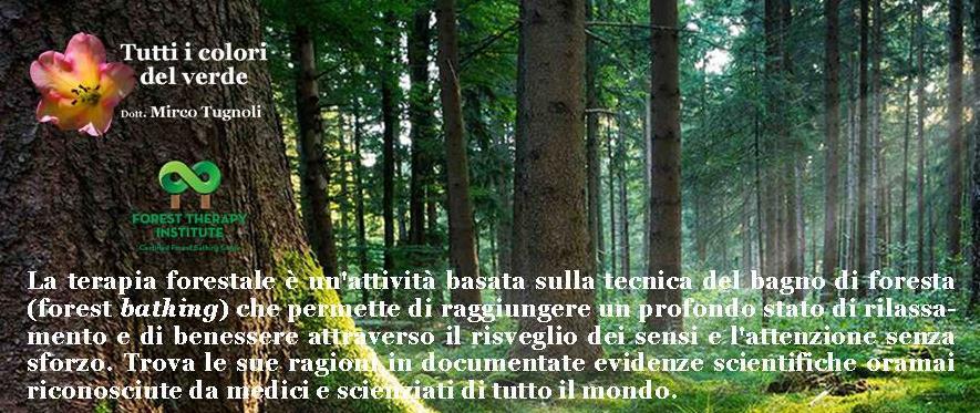 mircotugnoli_fti_2