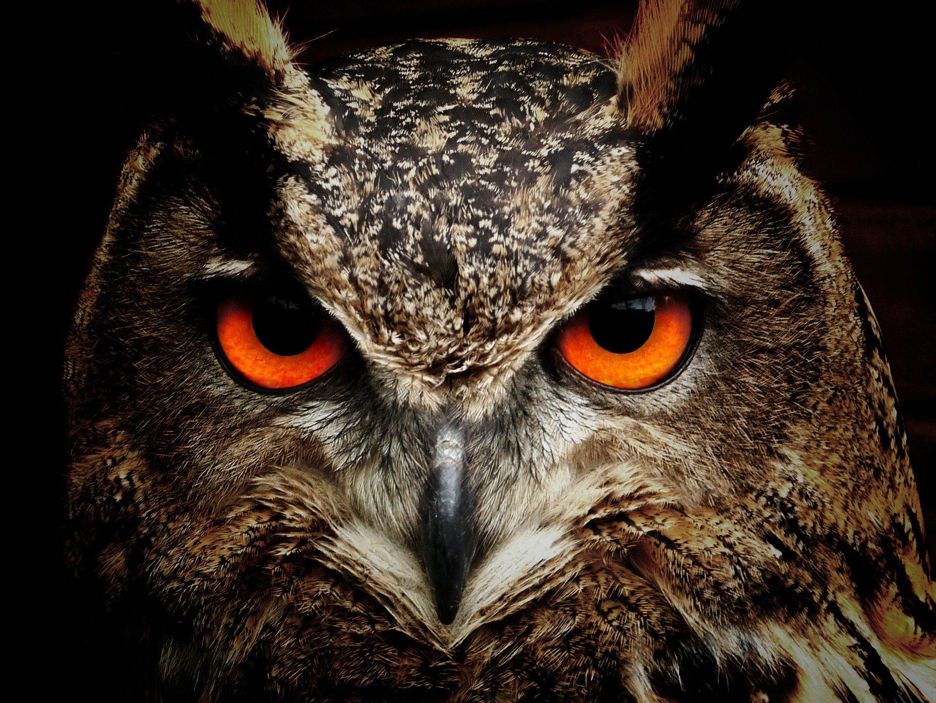 owl-50267_1920-1